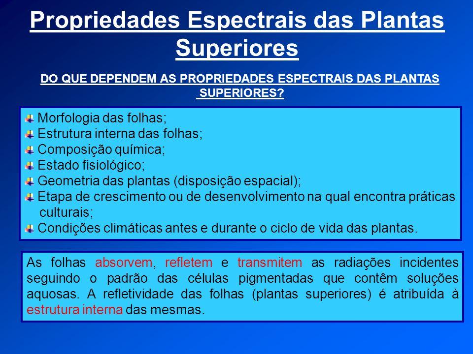 Propriedades Espectrais das Plantas Superiores Morfologia das folhas; Estrutura interna das folhas; Composição química; Estado fisiológico; Geometria