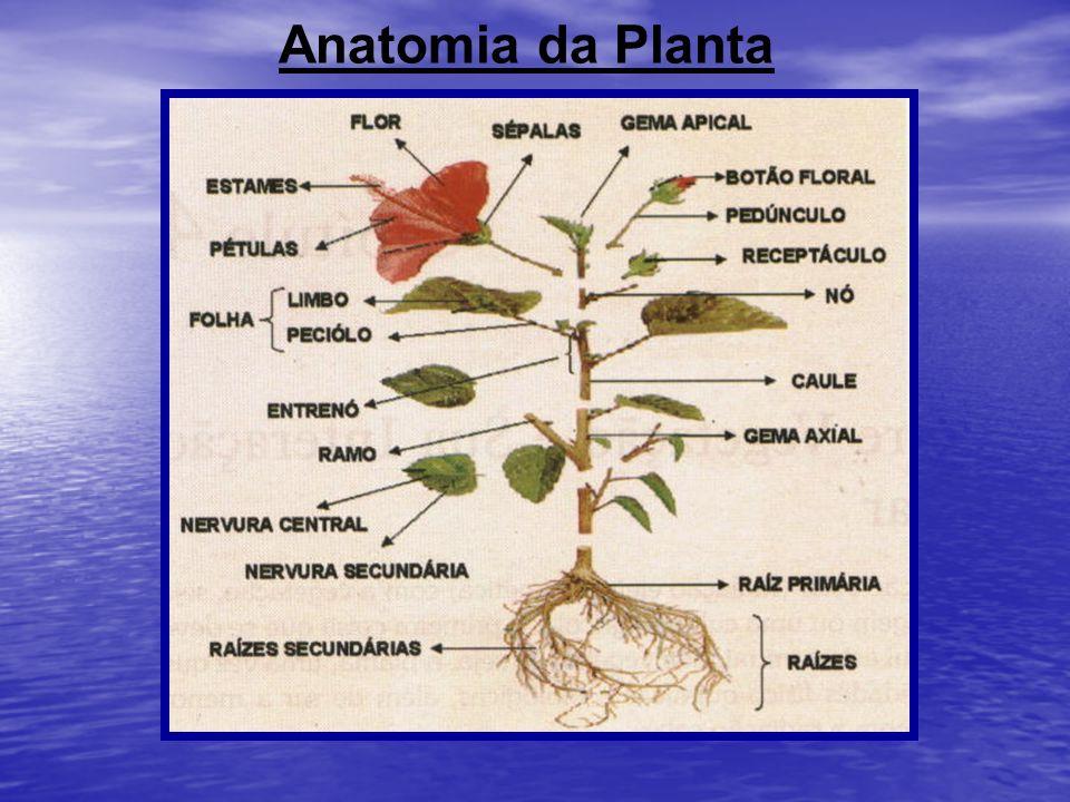 Anatomia da Planta