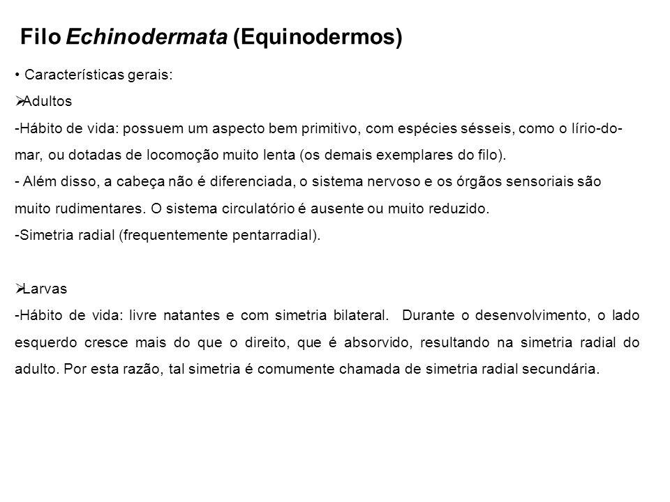 Filo Echinodermata (Equinodermos) Características gerais: Adultos -Hábito de vida: possuem um aspecto bem primitivo, com espécies sésseis, como o lírio-do- mar, ou dotadas de locomoção muito lenta (os demais exemplares do filo).