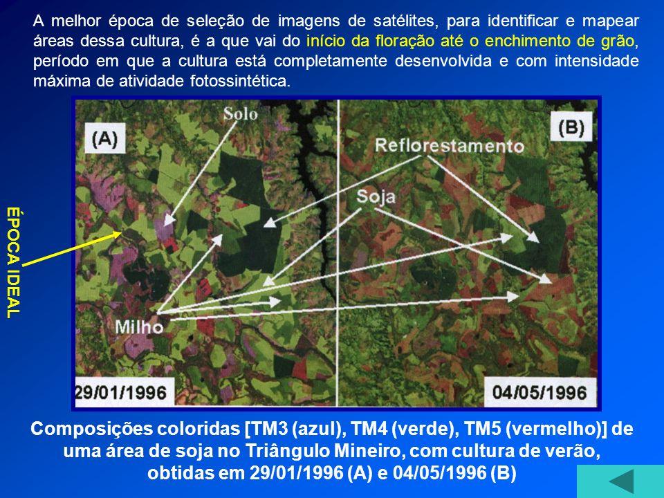 Composições coloridas [TM3 (azul), TM4 (verde), TM5 (vermelho)] de uma área de soja no Triângulo Mineiro, com cultura de verão, obtidas em 29/01/1996