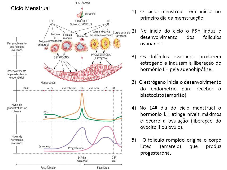 1)O ciclo menstrual tem início no primeiro dia da menstruação.