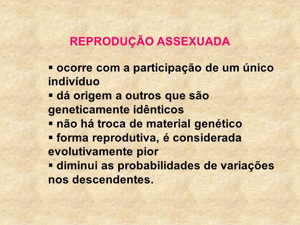 REPRODUÇÃO ASSEXUADA ocorre com a participação de um único indivíduo dá origem a outros que são geneticamente idênticos não há troca de material genét