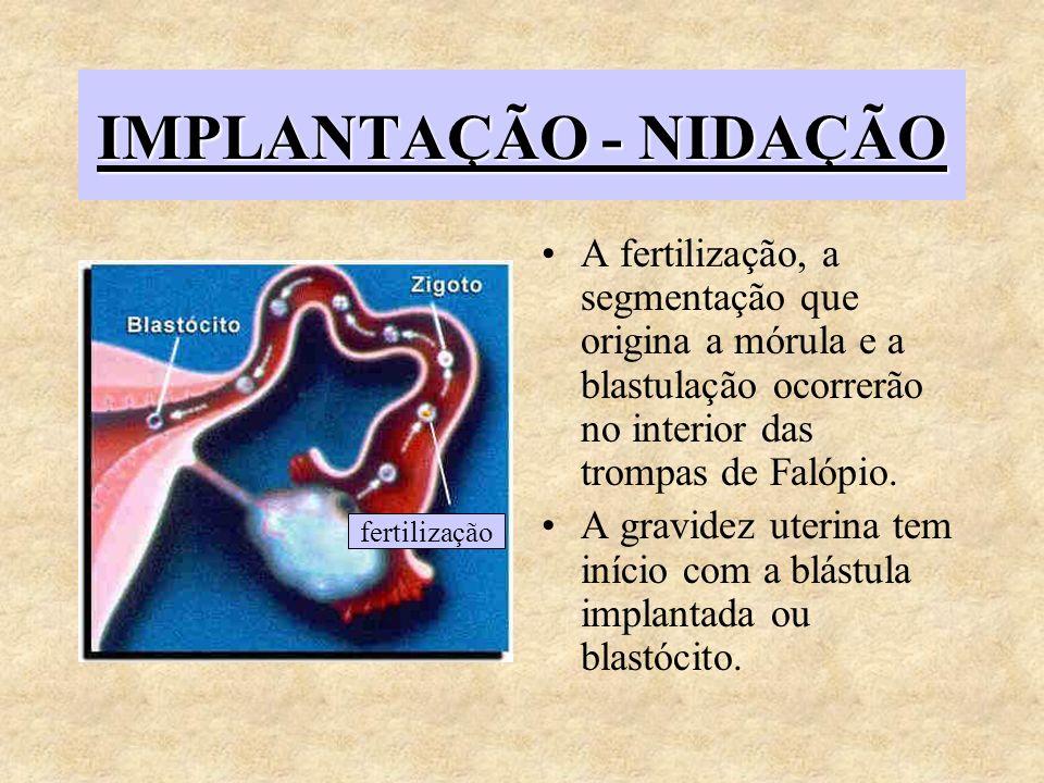 IMPLANTAÇÃO - NIDAÇÃO A fertilização, a segmentação que origina a mórula e a blastulação ocorrerão no interior das trompas de Falópio. A gravidez uter