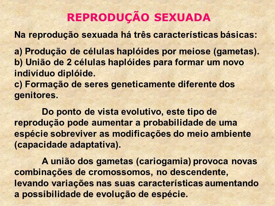 REPRODUÇÃO SEXUADA Na reprodução sexuada há três características básicas: a) Produção de células haplóides por meiose (gametas). b) União de 2 células