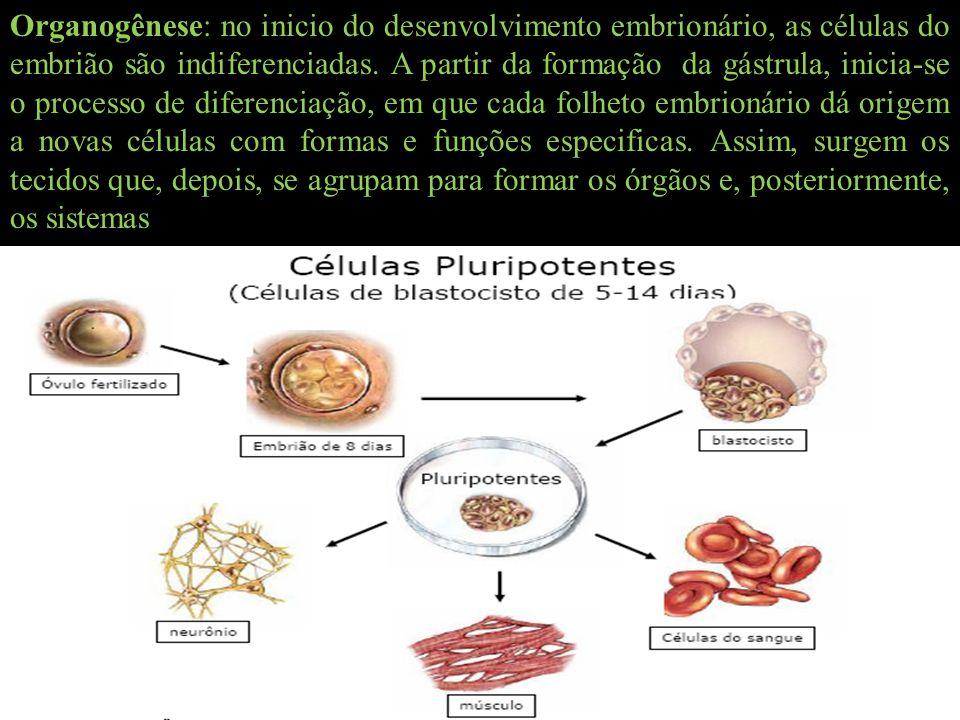 Organogênese: no inicio do desenvolvimento embrionário, as células do embrião são indiferenciadas. A partir da formação da gástrula, inicia-se o proce