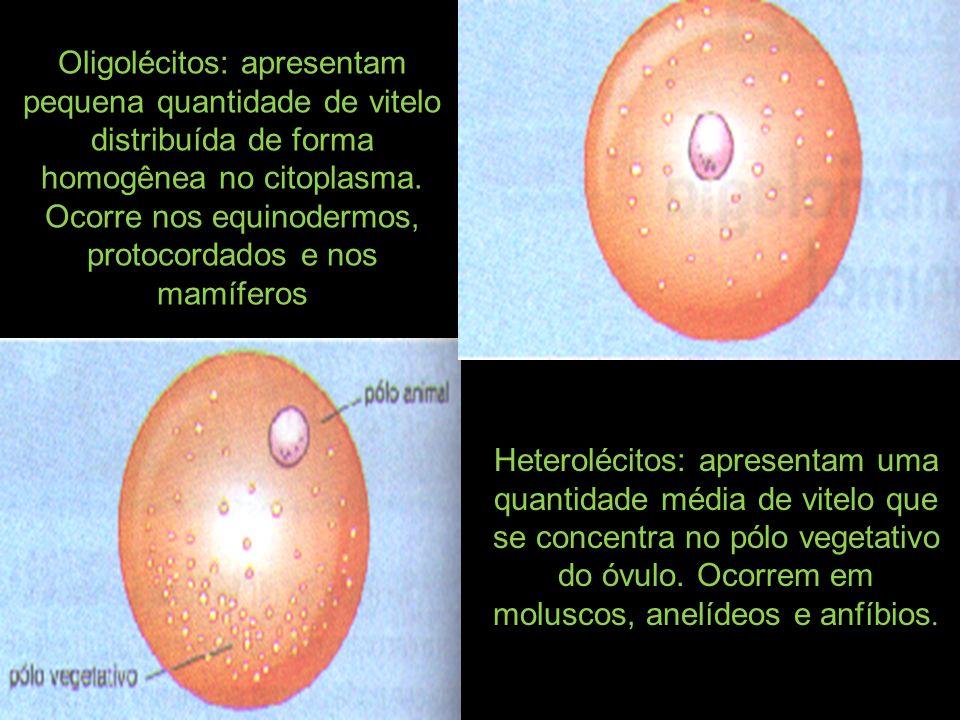 Endoderme, formará: Todo o tubo digestivo, exceto a mucosa oral e anal, e seus anexos.