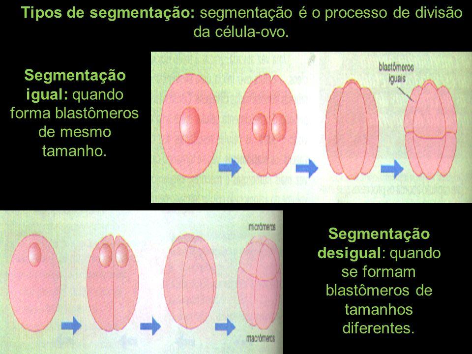 Segmentação total: quando toda a célula ovo se divide Segmentação discoidal: quando apenas o pólo animal do zigoto se divide Segmentação superficial: quando apenas a parte superficial da célula se divide