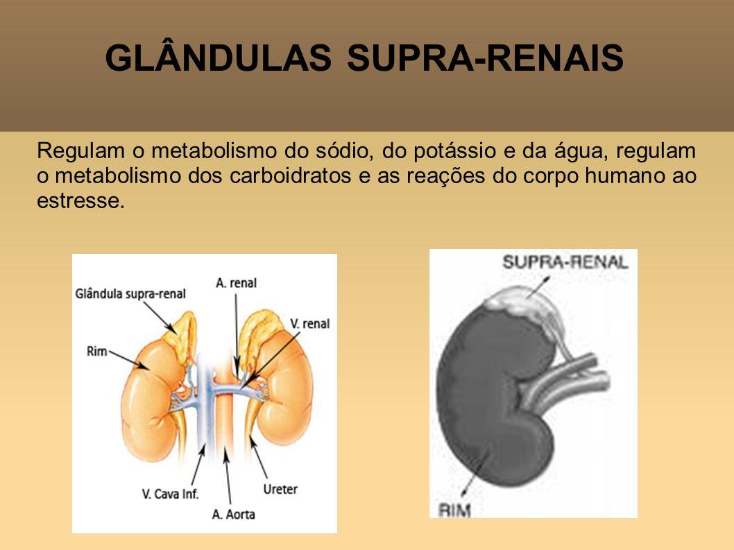 GLÂNDULAS SUPRA-RENAIS Regulam o metabolismo do sódio, do potássio e da água, regulam o metabolismo dos carboidratos e as reações do corpo humano ao e