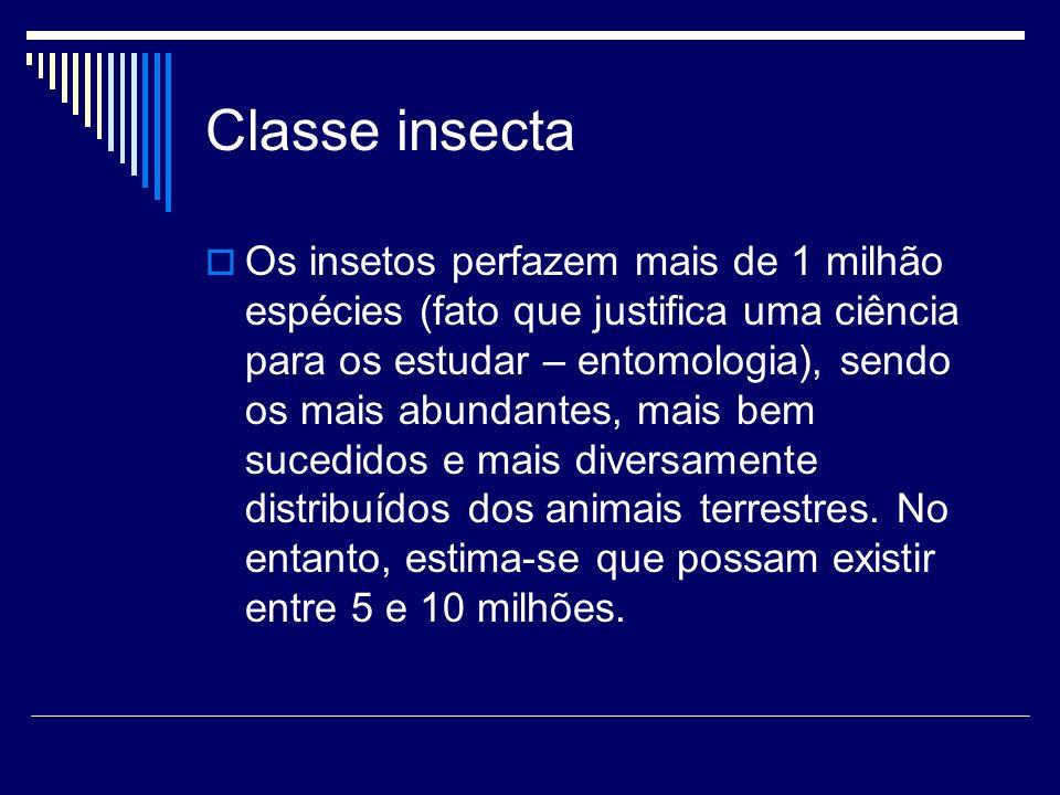 Os insetos perfazem mais de 1 milhão espécies (fato que justifica uma ciência para os estudar – entomologia), sendo os mais abundantes, mais bem suced