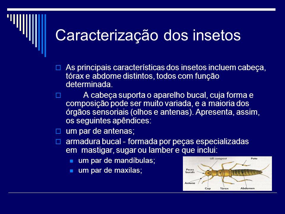 Caracterização dos insetos As principais características dos insetos incluem cabeça, tórax e abdome distintos, todos com função determinada. A cabeça