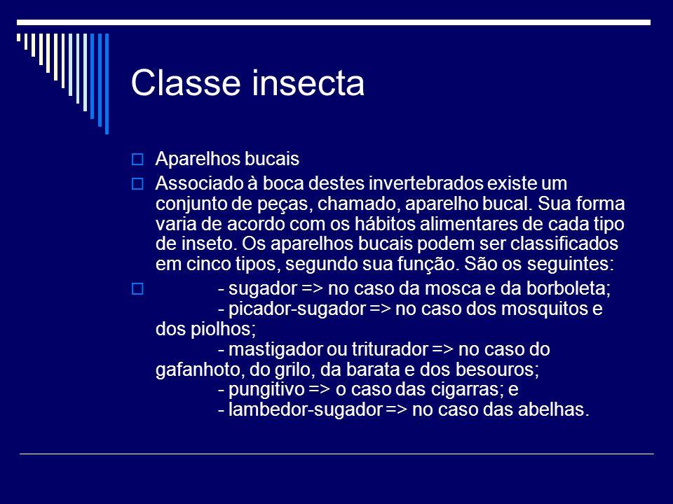 Classe insecta Aparelhos bucais Associado à boca destes invertebrados existe um conjunto de peças, chamado, aparelho bucal. Sua forma varia de acordo