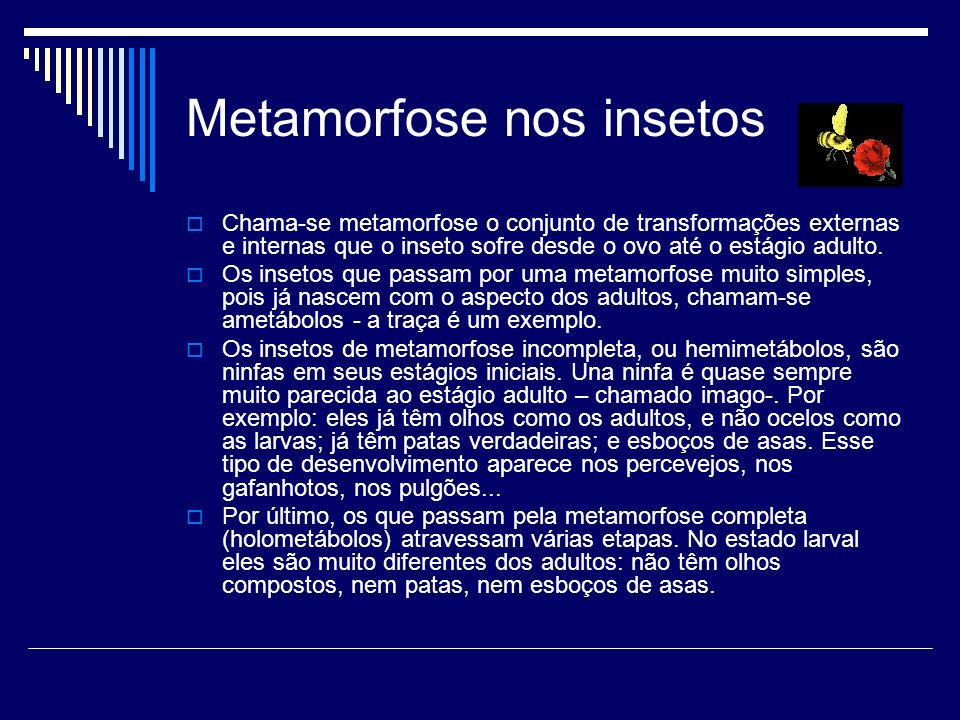 Metamorfose nos insetos Chama-se metamorfose o conjunto de transformações externas e internas que o inseto sofre desde o ovo até o estágio adulto. Os