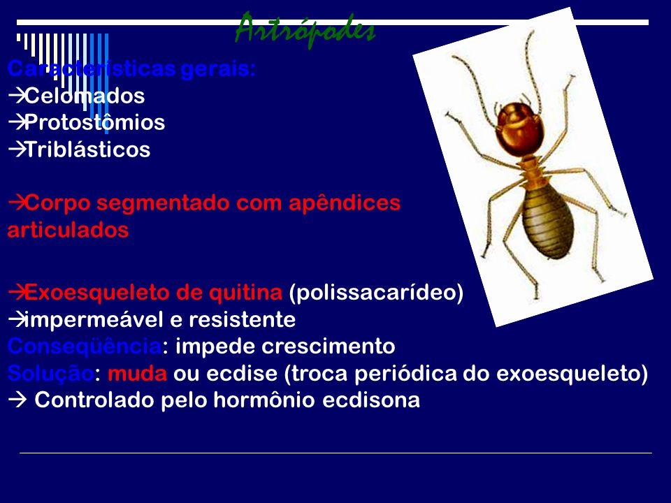 Os insetos e o ser humano Aspectos positivos Algumas espécies têm papel fundamental na polinização de flores.