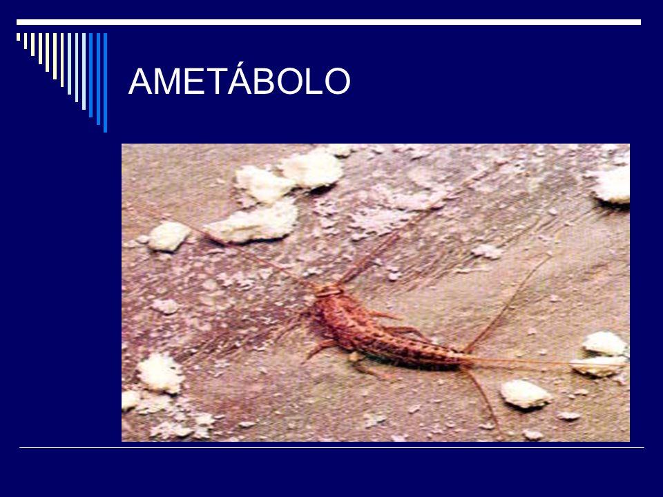 AMETÁBOLO