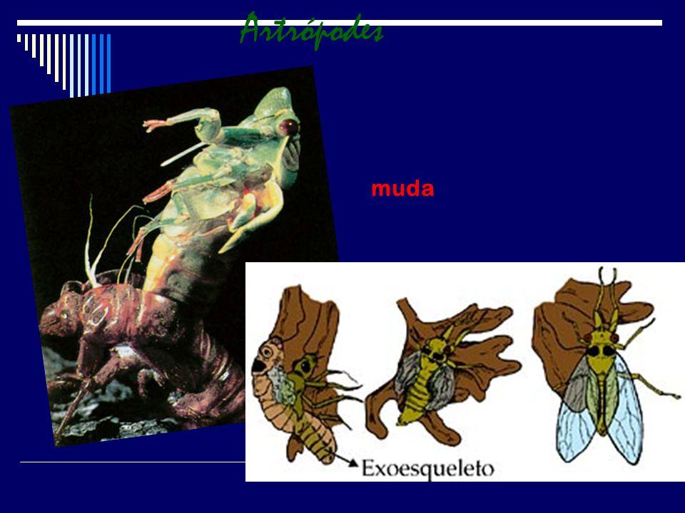 CLASSIFICAÇÃO A classificação dos artrópodes reflete a grande diversidade do filo.