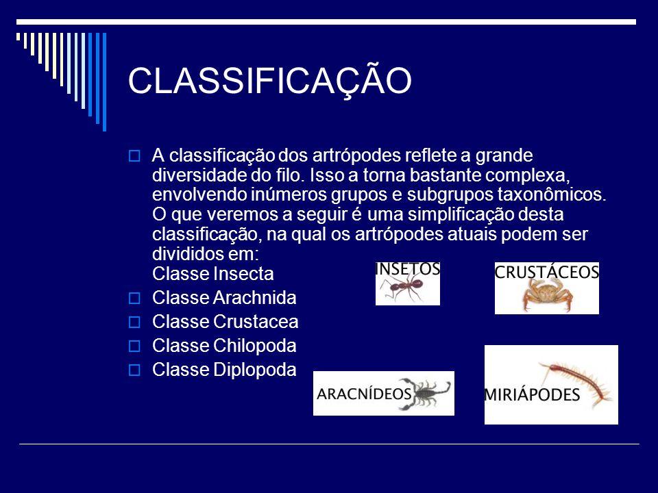 CLASSIFICAÇÃO A classificação dos artrópodes reflete a grande diversidade do filo. Isso a torna bastante complexa, envolvendo inúmeros grupos e subgru