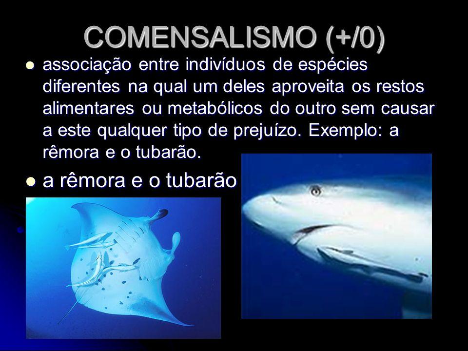 COMENSALISMO (+/0) associação entre indivíduos de espécies diferentes na qual um deles aproveita os restos alimentares ou metabólicos do outro sem cau