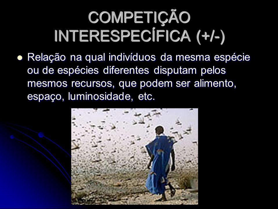 COMPETIÇÃO INTERESPECÍFICA (+/-) Relação na qual indivíduos da mesma espécie ou de espécies diferentes disputam pelos mesmos recursos, que podem ser a