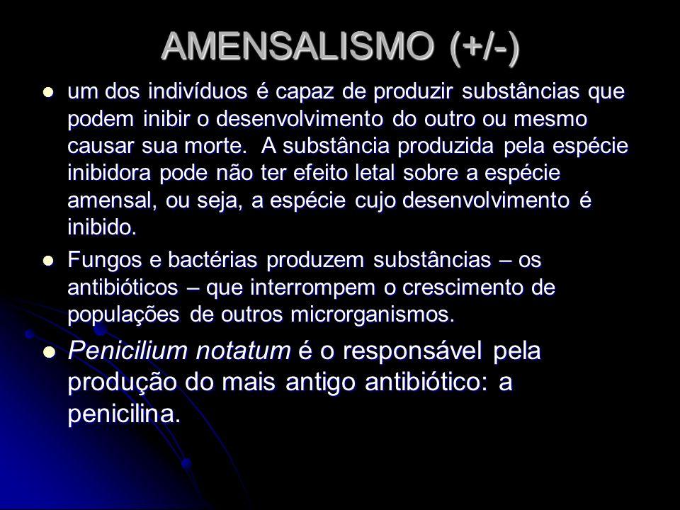 AMENSALISMO (+/-) um dos indivíduos é capaz de produzir substâncias que podem inibir o desenvolvimento do outro ou mesmo causar sua morte. A substânci