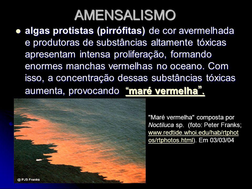 AMENSALISMO algas protistas (pirrófitas) de cor avermelhada e produtoras de substâncias altamente tóxicas apresentam intensa proliferação, formando en