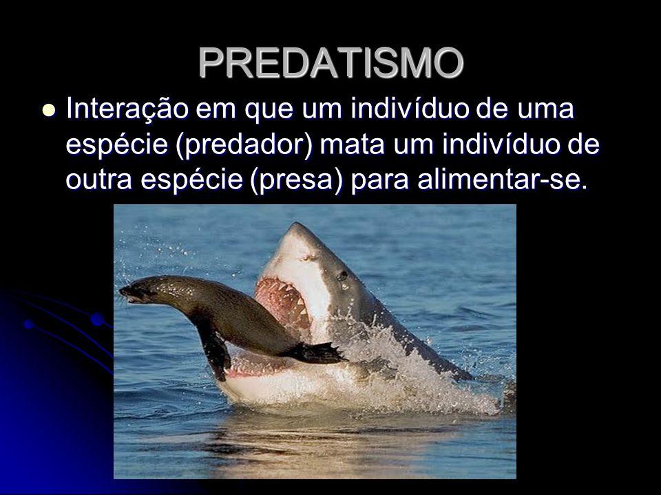 PREDATISMO Interação em que um indivíduo de uma espécie (predador) mata um indivíduo de outra espécie (presa) para alimentar-se. Interação em que um i
