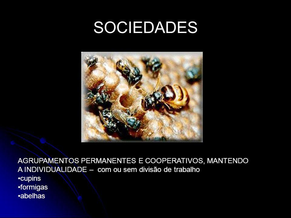 SOCIEDADES AGRUPAMENTOS PERMANENTES E COOPERATIVOS, MANTENDO A INDIVIDUALIDADE – com ou sem divisão de trabalho cupins formigas abelhas