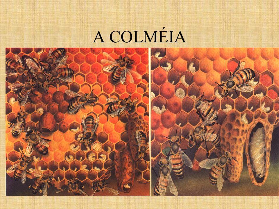A COLMÉIA