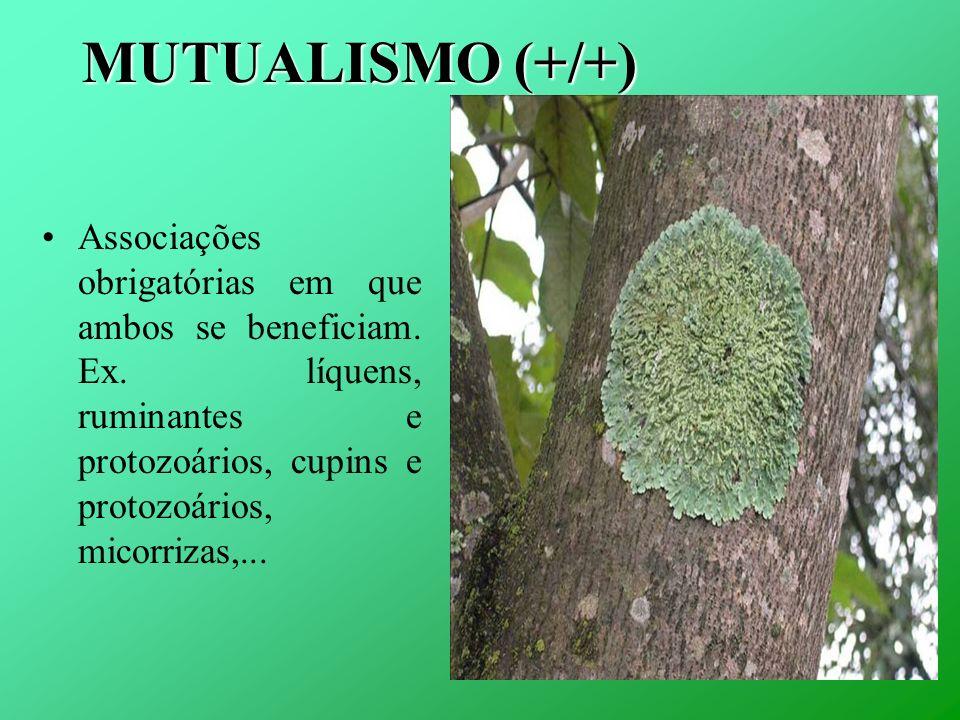 MUTUALISMO (+/+) Associações obrigatórias em que ambos se beneficiam. Ex. líquens, ruminantes e protozoários, cupins e protozoários, micorrizas,...