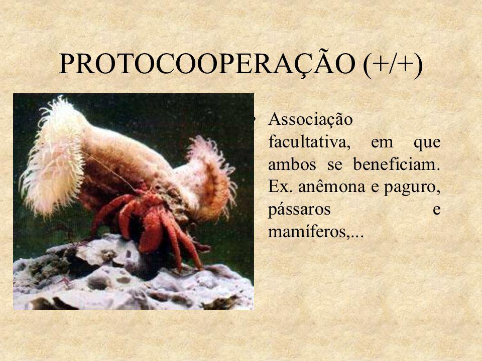 PROTOCOOPERAÇÃO (+/+) Associação facultativa, em que ambos se beneficiam. Ex. anêmona e paguro, pássaros e mamíferos,...