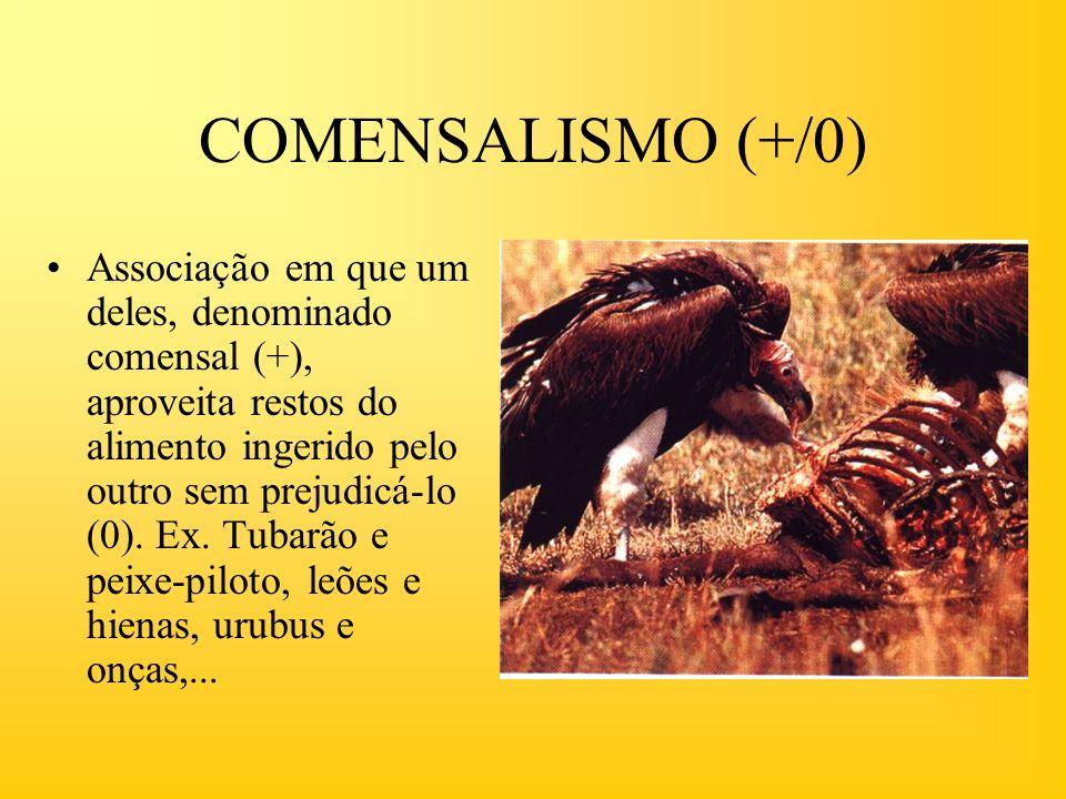 COMENSALISMO (+/0) Associação em que um deles, denominado comensal (+), aproveita restos do alimento ingerido pelo outro sem prejudicá-lo (0). Ex. Tub