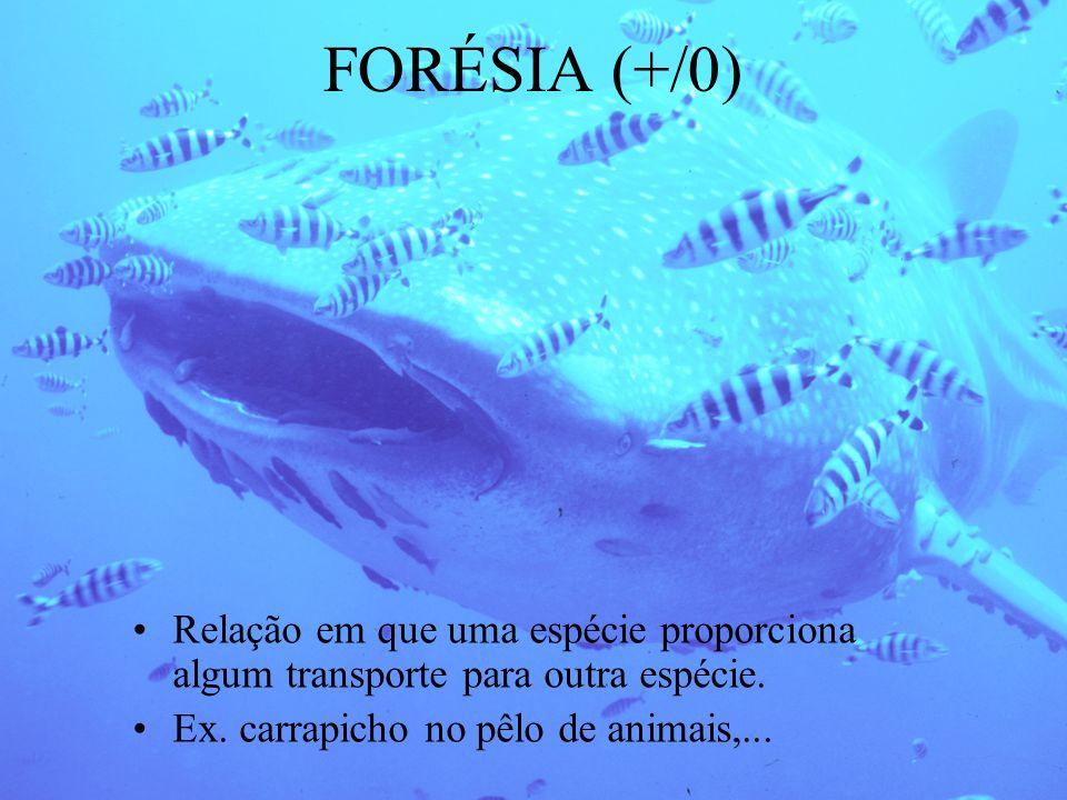 FORÉSIA (+/0) Relação em que uma espécie proporciona algum transporte para outra espécie. Ex. carrapicho no pêlo de animais,...
