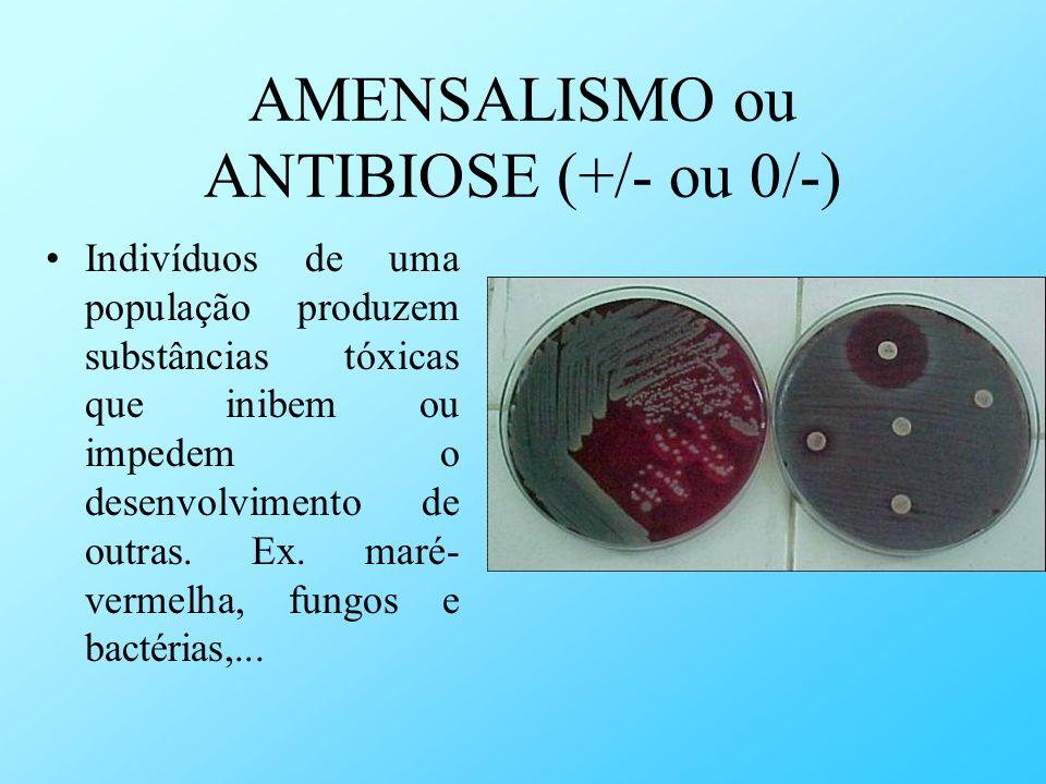 AMENSALISMO ou ANTIBIOSE (+/- ou 0/-) Indivíduos de uma população produzem substâncias tóxicas que inibem ou impedem o desenvolvimento de outras. Ex.