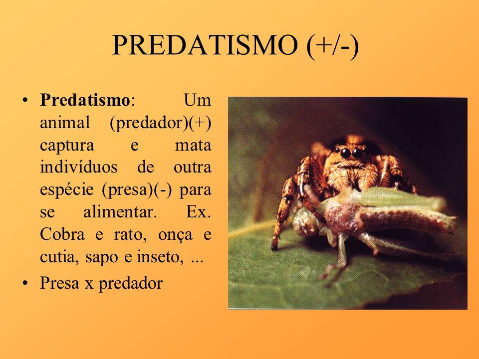 PREDATISMO (+/-) Predatismo: Um animal (predador)(+) captura e mata indivíduos de outra espécie (presa)(-) para se alimentar. Ex. Cobra e rato, onça e