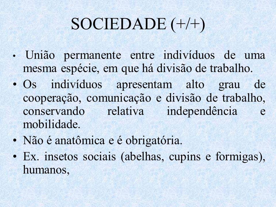 SOCIEDADE (+/+) União permanente entre indivíduos de uma mesma espécie, em que há divisão de trabalho. Os indivíduos apresentam alto grau de cooperaçã