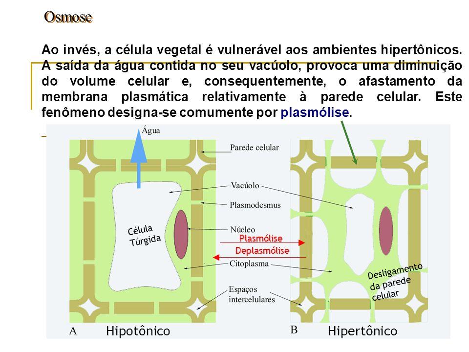 Osmose Ao invés, a célula vegetal é vulnerável aos ambientes hipertônicos. A saída da água contida no seu vacúolo, provoca uma diminuição do volume ce