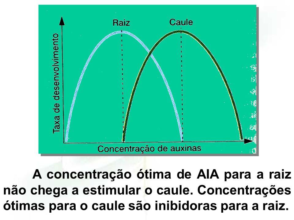 A concentração ótima de AIA para a raiz não chega a estimular o caule.