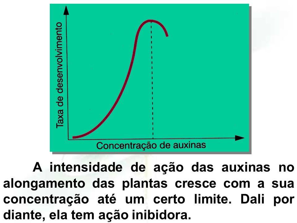 A concentração ótima de AIA para a raiz não chega a estimular o caule. Concentrações ótimas para o caule são inibidoras para a raiz.