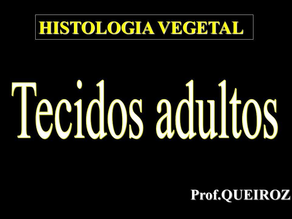 Prof.QUEIROZ HISTOLOGIA VEGETAL