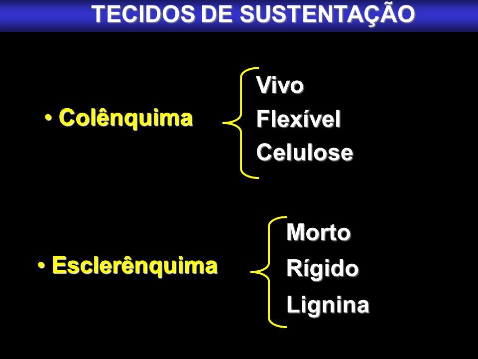 Colênquima Colênquima Esclerênquima Esclerênquima VivoFlexívelCelulose MortoRígidoLignina TECIDOS DE SUSTENTAÇÃO