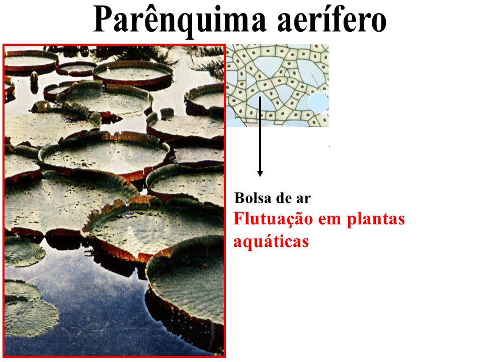 Bolsa de ar Flutuação em plantas aquáticas