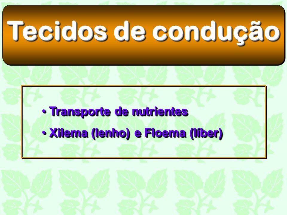 Tecidos de condução Transporte de nutrientes Transporte de nutrientes Xilema (lenho) e Floema (líber) Xilema (lenho) e Floema (líber) Transporte de nu