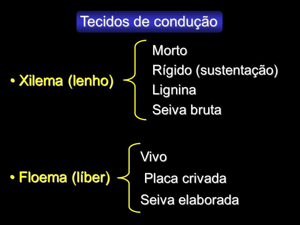 Tecidos de condução Xilema (lenho) Xilema (lenho) Floema (líber) Floema (líber) Morto Rígido (sustentação) Lignina Seiva bruta Vivo Placa crivada Plac
