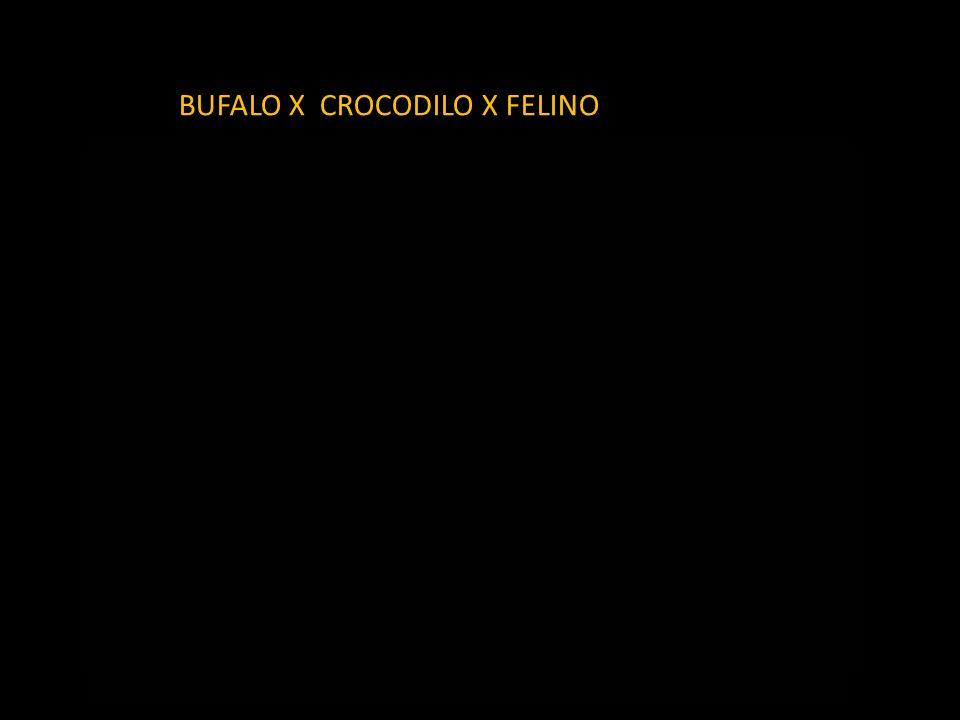 BUFALO X CROCODILO X FELINO