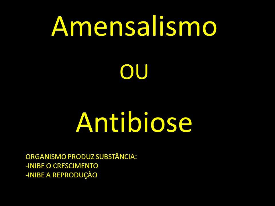 Amensalismo OU Antibiose OO ORGANISMO PRODUZ SUBSTÂNCIA: -INIBE O CRESCIMENTO -INIBE A REPRODUÇÀO