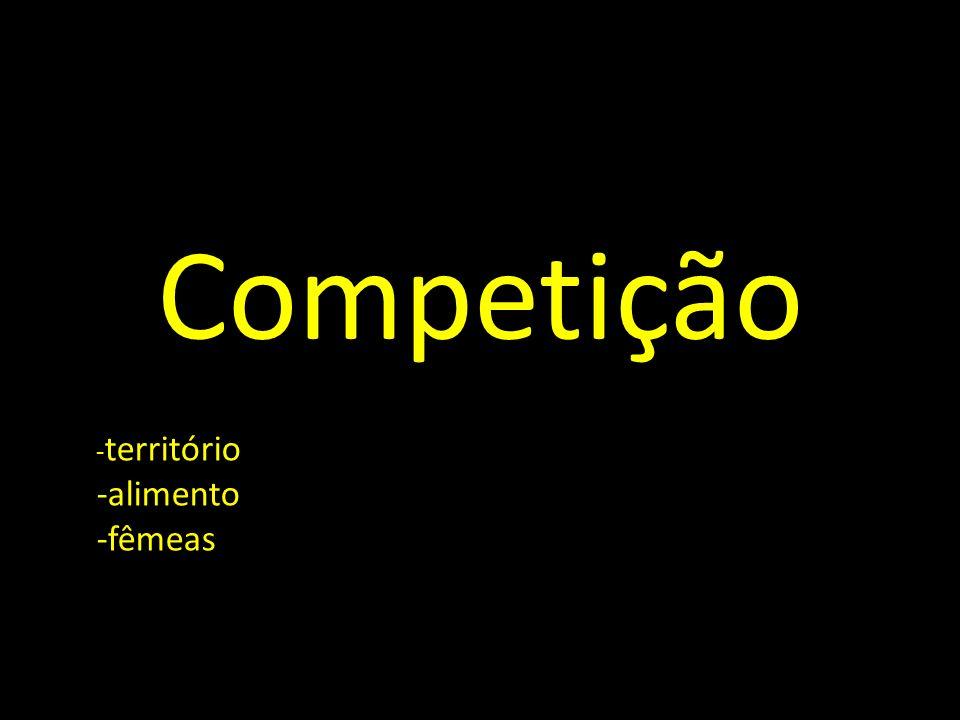 Competição - território -alimento -fêmeas