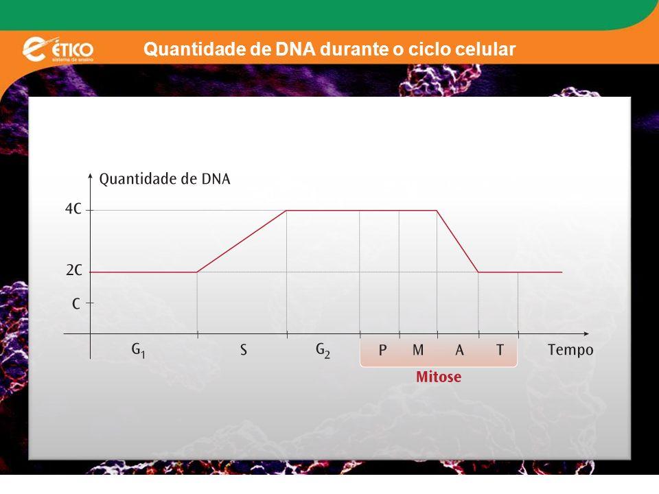 Quantidade de DNA durante o ciclo celular