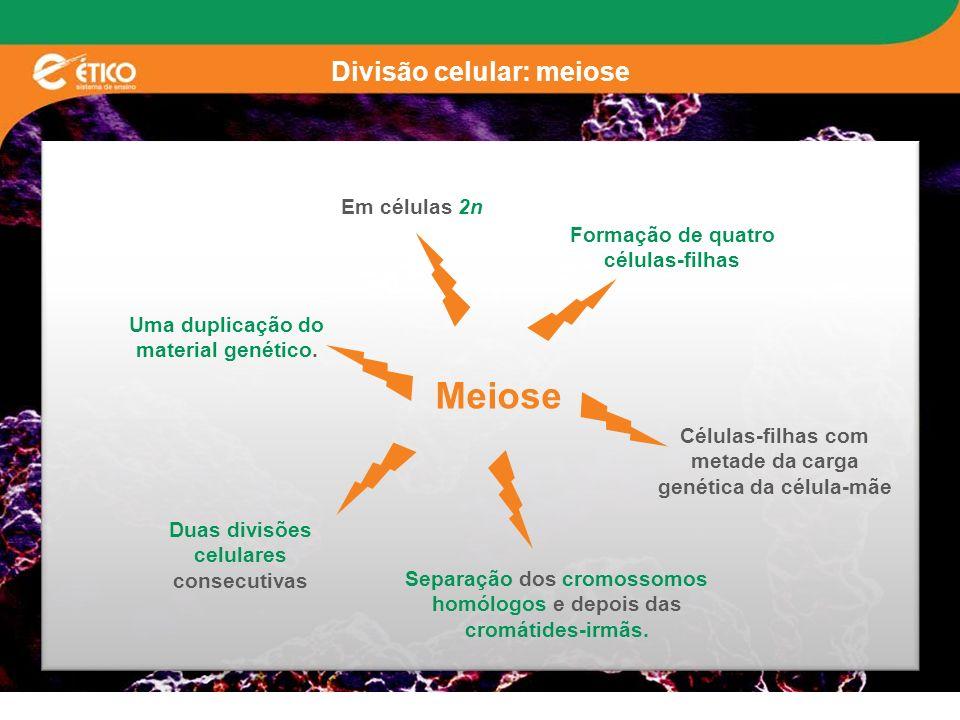 Divisão celular: meiose Meiose Em células 2n Uma duplicação do material genético. Duas divisões celulares consecutivas Separação dos cromossomos homól