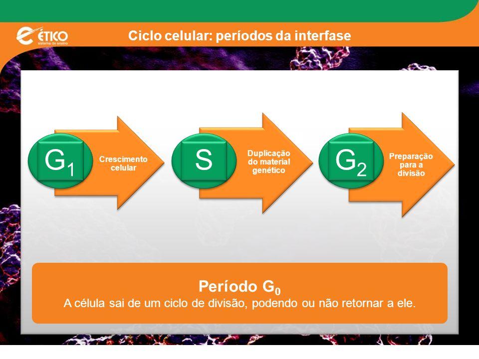Ciclo celular: períodos da interfase Crescimento celular G1G1 G1G1 Duplicação do material genético S S Preparação para a divisão G2G2 G2G2 Período G 0