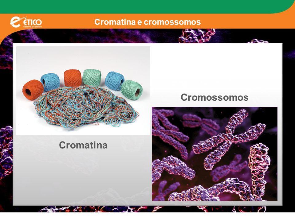 Cromatina e cromossomos Cromatina Cromossomos