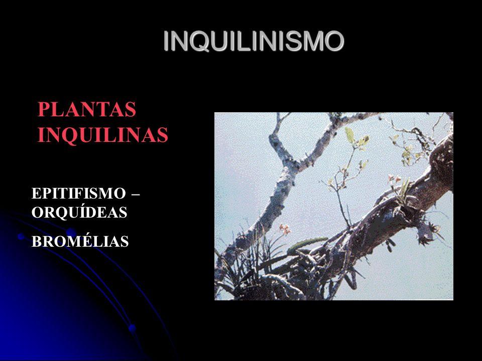 PLANTAS INQUILINAS EPITIFISMO – ORQUÍDEAS BROMÉLIAS INQUILINISMO